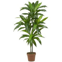 Nearly Natural Dracaena Real Touch Silk Plant ($45) found on Polyvore featuring home, home decor, floral decor, filler, green, faux plants, fake plants, nearly natural, green home decor and nearly natural silk plants
