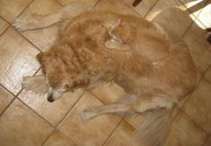 10 Unbelievable Photos of Camouflaged Cats