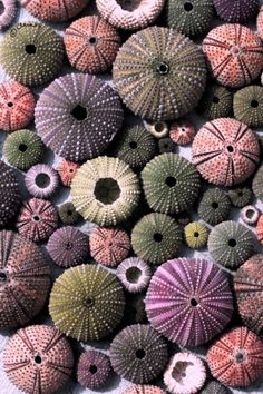 #colours #textures #designinspiration www.naturalhistory.co.uk