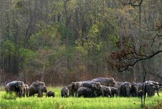 A white tiger or a sharp leopard trying to befriend you, a pack of wild elephants staring at you, gigantic crocodiles pouncing towards you for food, Olive Ridley Turtles resting on the grass tract and the dissonance of Siberian migrant birds in winter. Odisha- Wildlife Sanctuary