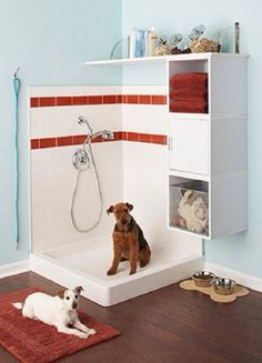 My dog will have its own shower
