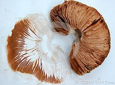Die 92 Besten Bilder Von Witterung Weather Vanes Fungi Und