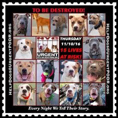 "15 BEAUTIFUL LIVES TO BE DESTROYED 11/10/16  @ NYC ACC **SO MANY GREAT DOGS HAVE BEEN KILLED: Puppies, Throw Away Mamas, Good Family Dogs. This is a HIGH KILL ""CARE CENTER"" w/ POOR LIVING CONDITIONS.  Please Share:    To rescue a Death Row Dog, Please read this: http://information.urgentpodr.org/adoption-info-and-list-of-rescues/"