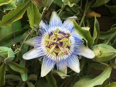 Passion flower... look it up....read the meaning behind it...