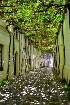 20 of the most beautiful streets in the world Jerez de la Frontera: Andalusia, Spain. Beautiful Streets, Beautiful World, Beautiful Places, Beautiful Gardens, Beautiful Pictures, Landscape Architecture, Landscape Design, Garden Design, Beautiful Architecture
