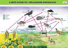 """Képtalálat a következőre: """"fa részei"""" Environmental Studies, Techno, Classroom, Science, Photo And Video, Infographics, Homeschooling, Birds, Play"""
