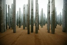 Forest without Leaves installation, Abbas Kiarostami