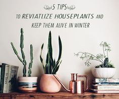 5 Tips to Revitalize Houseplants (and Keep Them Alive in Winter)