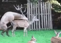 Así murió la mamá de Bambi...
