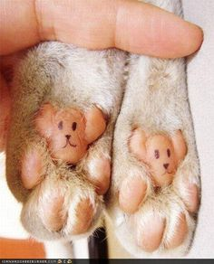 How cute is this?  These pink jellybean toes of doom are widdle teddies!