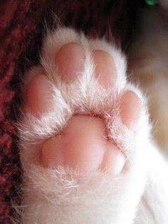 Manito rosada de gato bebé