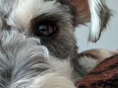 Through the eyes of my baby #dogpictures #dogs #aww #cuteanimals #dogsoftwitter #dog #cute