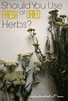 3 Reasons to Use Dried Herbs vs Fresh