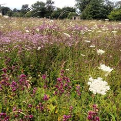 Wildflower meadow the the summer