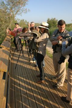 Nightingale safari