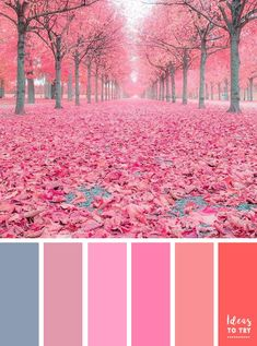 Pink autumn leaves ,when nature wears pink in Autumn