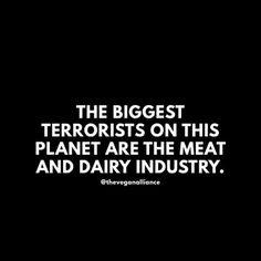 Vegan Monster Ⓥ ( Vegan Facts, Vegan Memes, Vegan Quotes, News Memes, Life Isnt Fair, Life Quotes Pictures, Why Vegan, Health And Wellness Quotes, Vegan Animals