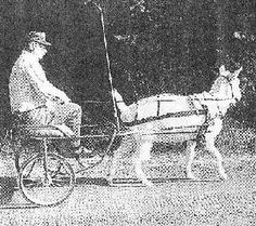 Building A Goat Cart - Breeding for Purpose -Could this translate to a miniature horse cart? Miniature Horse Tack, Goat Care, Mini Farm, Goat Farming, Farms Living, Homestead Survival, Urban Farming, Livestock, Pygmy Goats
