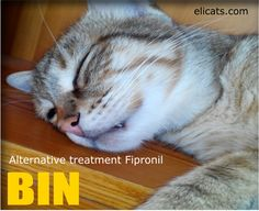 Alternative treatment Fipronil #AlternativeTreatmentFipronil, #Fleas http://elicats.it/alternative-treatment-fipronil/ With the beginning of spring it is a must to plan a protection against fleas, This purely informative article wants to focus attention on Fipronil's use and abuse and on the possible less harmful alternatives for our cat.   Alternative treatment Fipronil We already had added the Fleas and...