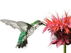 #Hummingbird #birds #flowers #art #watercolour #watercolor #nature #small #painting #brigitteklassenart