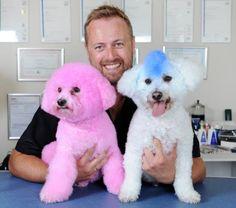 b000mba: Mixed Inspirations: Dye Dogs