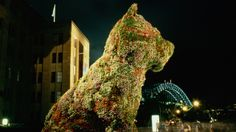"""Jeff Koons Puppy (Sydney, 1995) """"Puppy is a piece about love and happiness"""""""