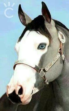 So pretty!!!! Beautiful blue eyes. Bald face horse.
