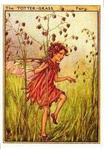 Totter-Grass Flower Fairy