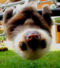 Super cute baby animals - Funny Wild Animal This video is a compilation of wildlife of animal babies. They're very cute animals just you have seen. Baby Animals Super Cute, Cute Little Animals, Cute Funny Animals, Cute Pets, Cutest Animals, Funny Cats, Baby Animals Pictures, Cute Animal Photos, Cute Sloth Pictures