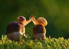 For the Love of Snail
