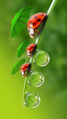 New garden wallpaper iphone photography ideas Beautiful Bugs, Beautiful Butterflies, Amazing Nature, Animals Beautiful, Beautiful Flowers, Cute Animals, Colorful Flowers, Tier Wallpaper, Animal Wallpaper