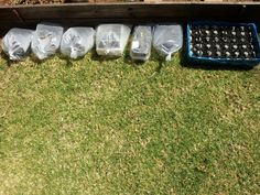 First few trays are ready, I planted green peppers, squash, chillies, runner beans, egg plant.