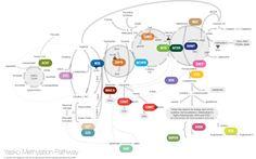 Yasko-Methylation-Pathway_7-22-13