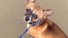 Chihuahua dies after attack at Eugene dog park Dog Attack, Dog Area, Husky Mix, 5 Year Olds, The Last Time, Chihuahua, Pitbulls, Boyfriend, Park