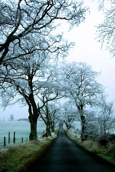 Deserted road near Dryburgh in the Scottish Borders after a hard frost on Christmas Day by Keith