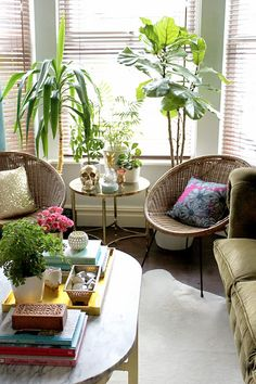 plants in living room