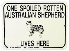 one spoiled rotten Miniature Australian Shepherd lives here Mini Aussie Puppy, Aussie Dogs, Blue Merle, Mini Australian Shepherds, Australian Shepherd Puppies, Spoiled Rotten, Baby Puppies, Working Dogs, Dog Quotes