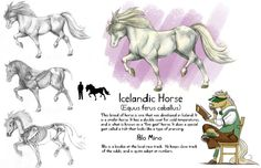 icelandic horses in art - Google Search
