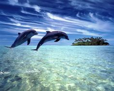 Another obsession of mine..dolphons! Love them! So pretty :)