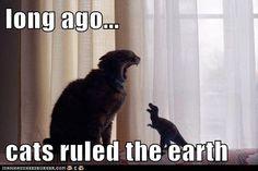 Jurassic kitteh