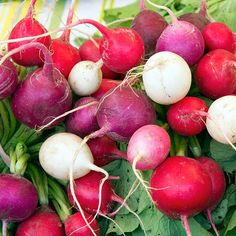 15 vegetables you can plant in September! Fall Vegetables, Planting Vegetables, Growing Vegetables, Vegetable Planting Calendar, Garden Plants Vegetable, Growing Lettuce, Fall Plants, Autumn Garden, Hacks
