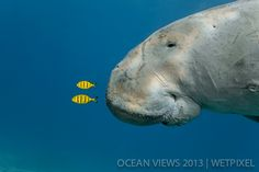 **First Prize**: Douglas David Seifert. *Dugong*.
