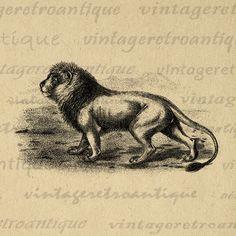 Lion Cat Wild Animal Antique Graphic Digital Image Download Printable Vintage Clip Art Jpg Png Eps  HQ 300dpi No.001 @ vintageretroantique.com #DigitalArt #Printable #Art #VintageRetroAntique #Digital #Clipart #Download