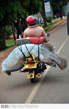 Meanwhile in Uganda - have also seen this!