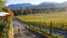 Boynton's Feathertop Winery, High Country, Victoria, Australia - Bright, Vic