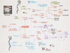 La Chuleta de Osler: Neurología: Sisterma nervioso autónomo SNA - Topografía