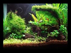 by banyu421 in Aquascaping Tag: aquascape , aquascaping