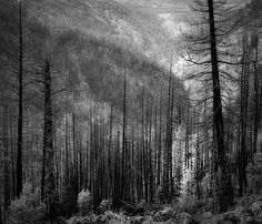 Dodging and Burning to Create More Effective Black and White Images. A Post By: Alex Morrison. http://digital-photography-school.com/dodging-and-burning-to-create-more-effective-black-and-white-images