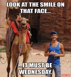 camel on wednesday