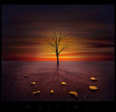 Photo manipulation comprising of four images sky, tree, ground,leaves (the leaves are one image manipulated in the manner they have been to show them as different leaves) All images were taken by me Fine Art Photo, Beautiful Sunrise, Pretty Pictures, Pretty Pics, Amazing Pictures, Photo Manipulation, Art World, Cool Artwork, Nature Photography